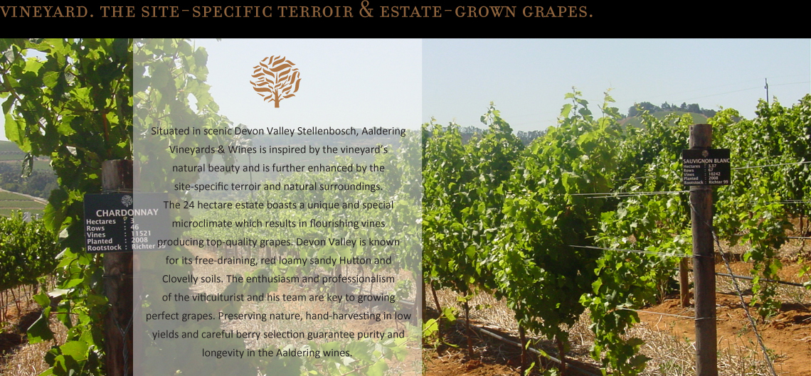 Situated in scenic Devon Valley Stellenbosch, Aaldering Vineyards & Wines is inspired by the vineyard's natural beauty and is further enhanced by the site-specific terroir and natural surroundings. The 24 hectare estate boasts a unique and special microclimate which results in flourishing vines producing top-quality grapes. Devon Valley is known for its free-draining, red loamy sandy Hutton and Clovelly soils. The enthusiasm and professionalism of the viticulturist and his team are key to growing perfect grapes. Preserving nature, hand-harvesting in low yields and careful berry selection guarantee purity and longevity in the Aaldering wines.