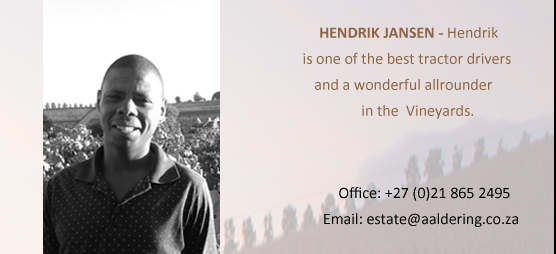 HENDRIK JANSEN – Hendrik is one of the best tractor drivers in the Cape Winelands and a wonderful allrounder in the vineyards.